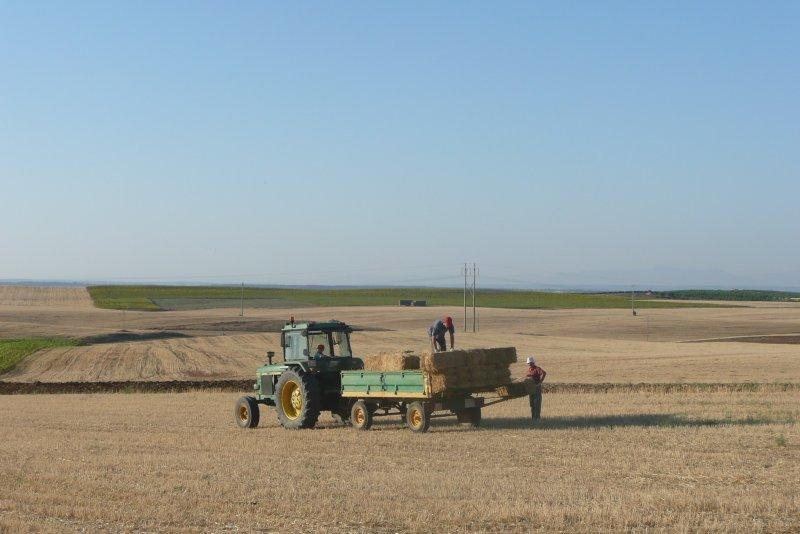 tractor y remolque con alpacas de paja