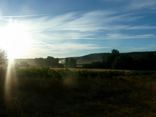 el sol convierte en vapor el rocío Primer plano de viña